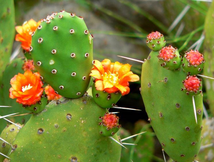 opuntia, fiori di bach, dieta, naturopata