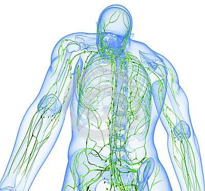 Circolazione venosa e linfatica. Quanto incide il caldo? Prevenzione e rimedi naturali.
