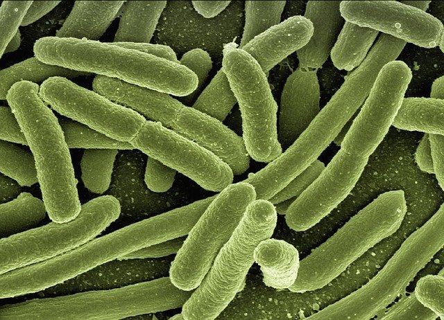 Sistema Immunitario e Microbiota e… COVID
